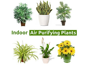 Best House Plants To Improve Indoor Air Quality