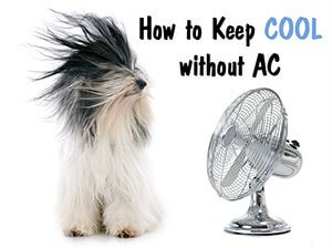 No Air Conditioning | Tips to Stay Cool